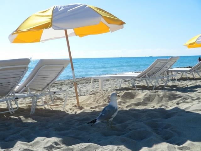 beachparasol-kotei